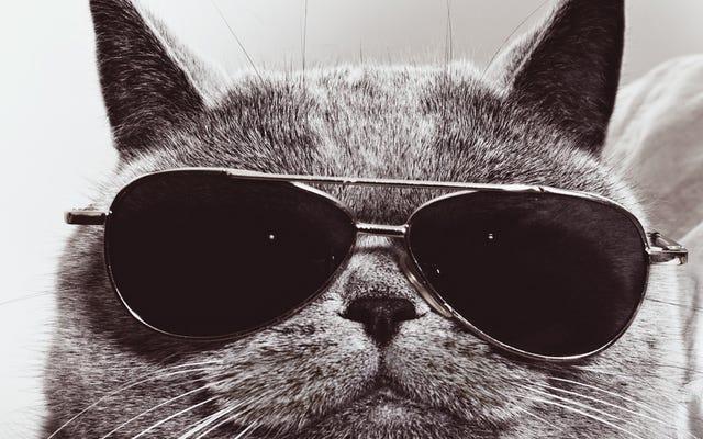 Comment l'Amérique a conçu une armée de chats cyborg pour espionner les Russes