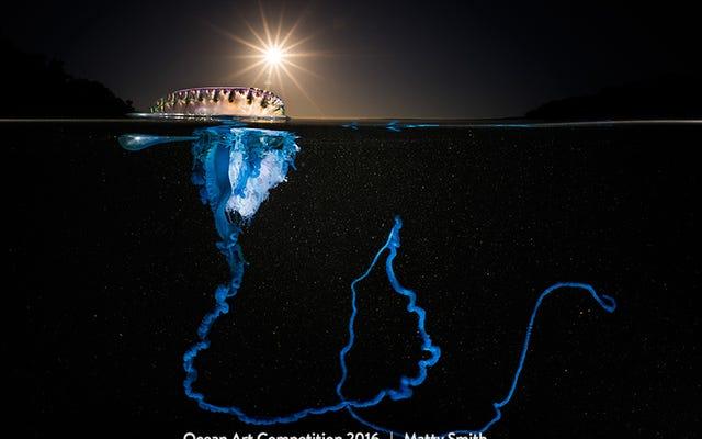 Las mejores fotografías submarinas de 2016 están fuera de este mundo