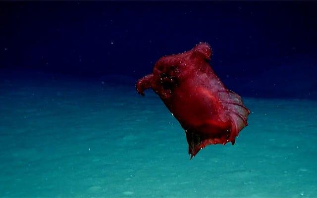 Un monstre de poulet sans tête en haute mer filmé dans l'océan Austral