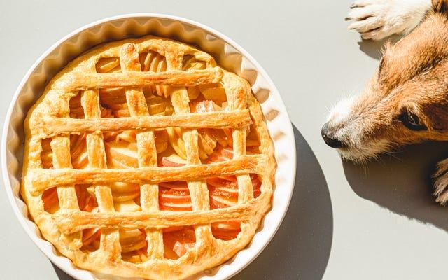 あなたの犬が食べられるものと食べられないものの感謝祭の食べ物