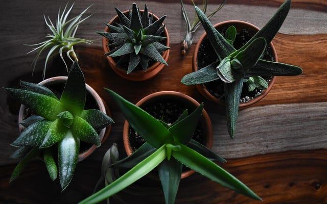 観葉植物を新しい場所に安全に移動する方法