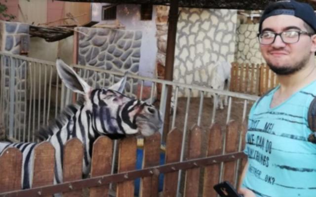 ロバをシマウマに偽装したとして嘲笑されたエジプトの動物園