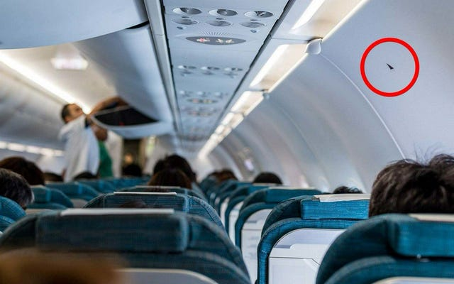 कुछ हवाई जहाज सीटों पर छोटे त्रिकोण का क्या मतलब है