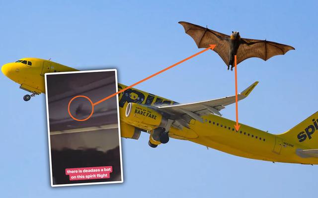 スピリット航空のフライト内を飛び回るコウモリがいた