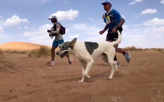 Un chien court un ultramarathon épuisant du désert juste pour le plaisir