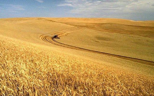 これらの3つの新しいGM作物は私たちの農業方法を変えるでしょう