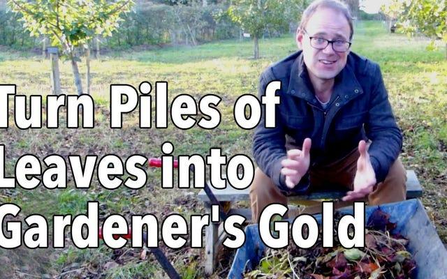 Bahçeniz İçin 'Yaprak Kalıbı' Yaparak Sonbahar Yapraklarını Kullanın