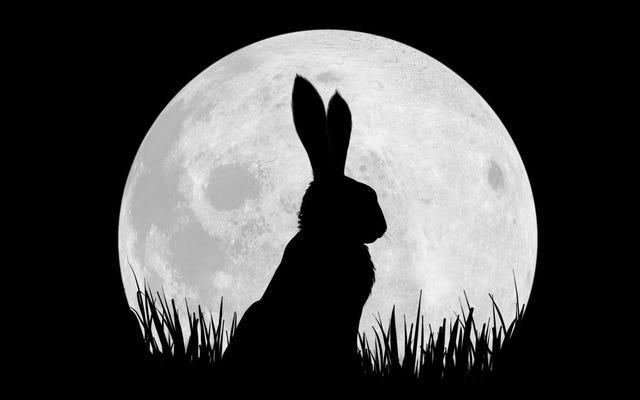 Netflix phát hành hình ảnh đầu tiên và dàn diễn viên đầy đủ cho một chương trình thỏ đáng yêu có tên Watership Down