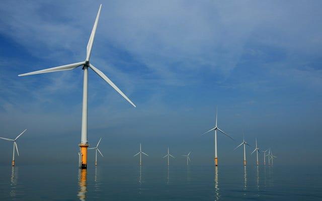 Морской ветер процветает, несмотря на экономический кризис, связанный с Covid-19