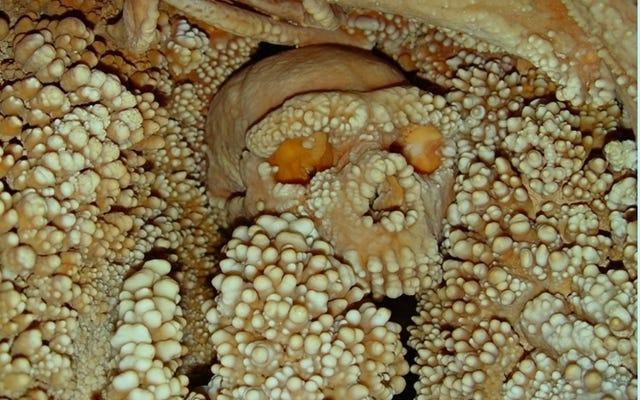 イタリアの洞窟に埋め込まれた頭蓋骨は、最も古いネアンデルタール人のDNAサンプルを産出します