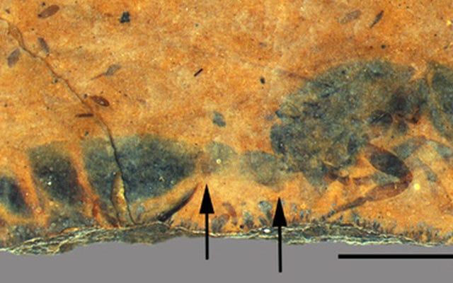 化石化した古代アリの女王が4600万年前の岩から出現