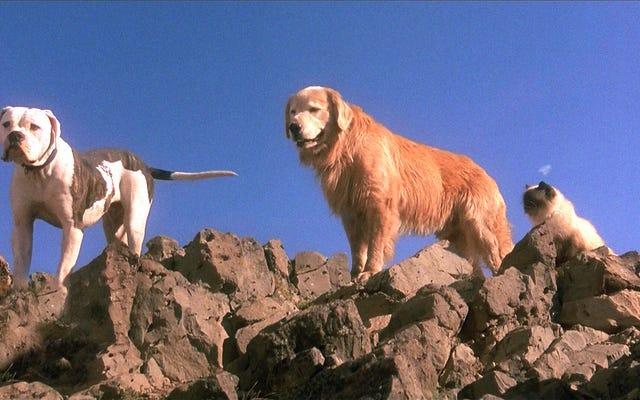 Soyez averti des scènes désagréables dans le divertissement avec `` Le chien meurt-il? ''