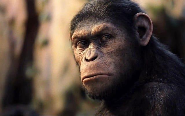 Les 9 films sur la planète des singes, classés