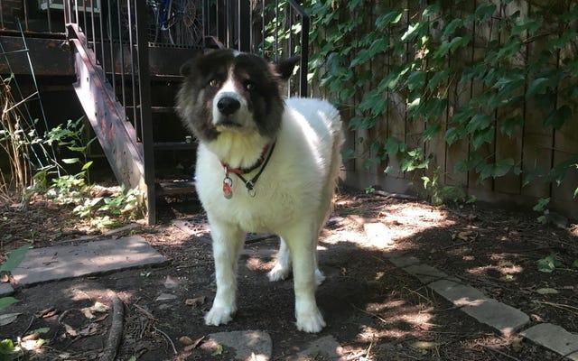 Luna Tolentino: Yeni Büyük Köpek