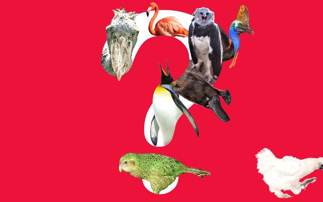 良い鳥は5羽いますが、どれが5羽ですか?
