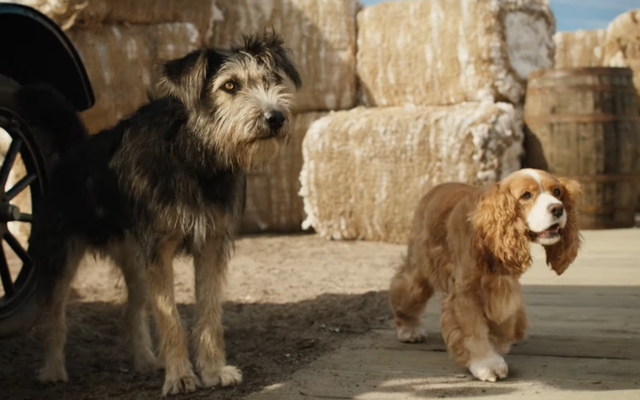 Star Crossed Puppers brille dans l'adorable première bande-annonce de Disney's Live-Action Lady and The Tramp Remake