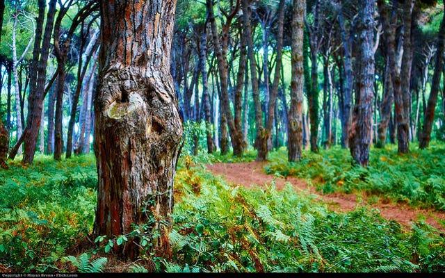 Ecco perché le foreste dovrebbero essere importanti per tutti noi