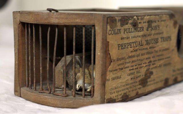 Le piège à souris antique d'un musée vieux de 155 ans attrape toujours les rongeurs