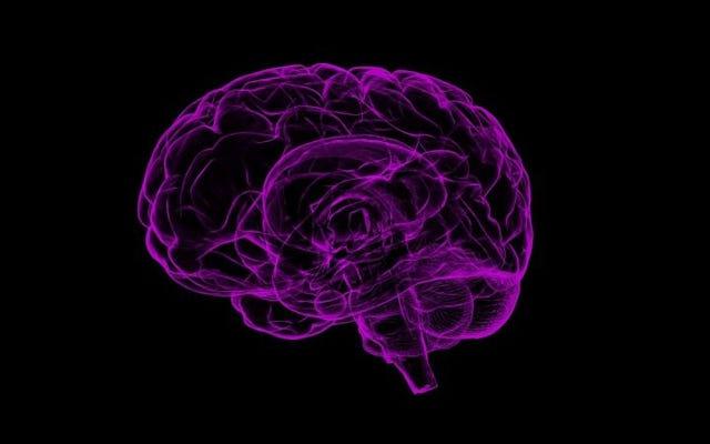न्यूरोसाइंटिस्ट ने सुअर के दिमाग को प्रयोगशाला में जीवित रखकर मृत्यु की अवधारणा को फिर से परिभाषित किया