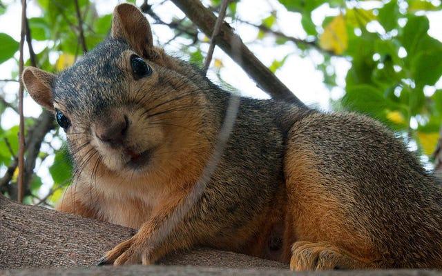 Белки организуют свои орехи лучше, чем некоторые люди устраивают свои туалеты