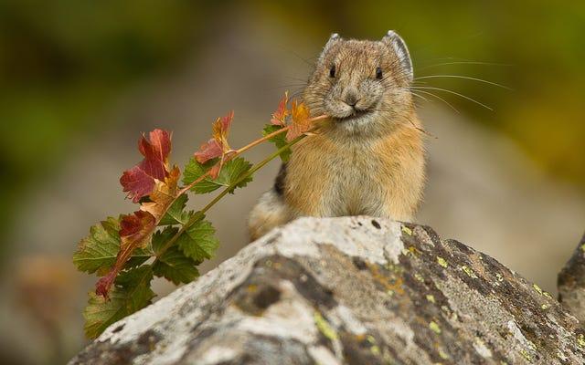 野花と優しさで生きる愛らしい動物は深刻な危機に瀕している