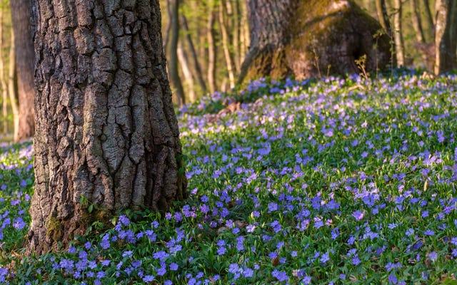पौधों को कैसे चुनें कि पेड़ों के नीचे अच्छी तरह से बढ़ेगा