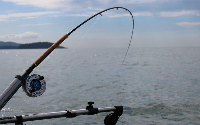 Thanh thiếu niên bắt được những con cá khổng lồ thời tiền sử, nói rằng nó có vị như cá tuyết