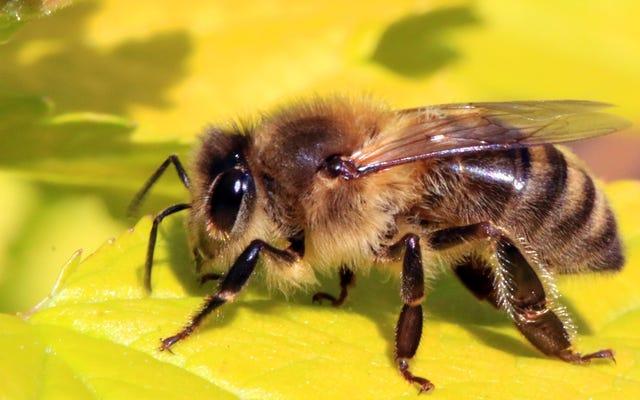 昨年の全日食の間、ミツバチはブーンという音を止めました