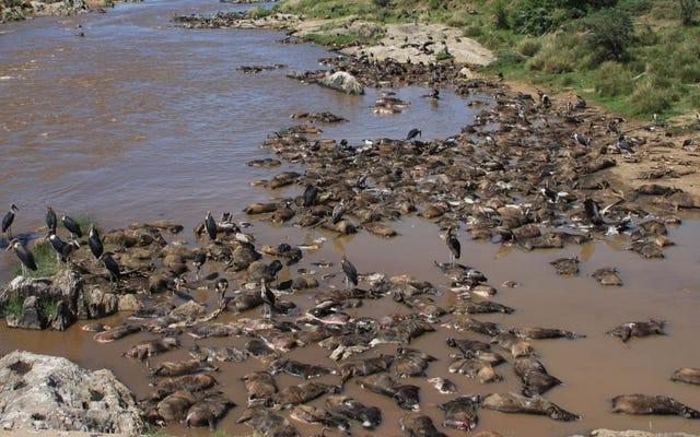 ซากสัตว์ป่าที่เน่าเปื่อยเป็นพลังแห่งธรรมชาติในเซเรนเกติ