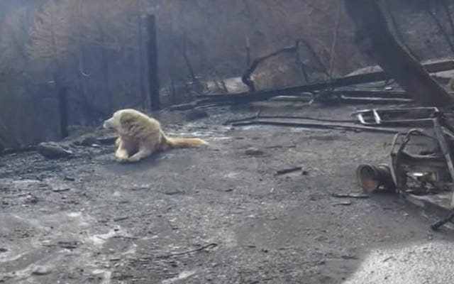 Un bon garçon qui a survécu au feu de camp a gardé la maison de sa famille pendant près d'un mois