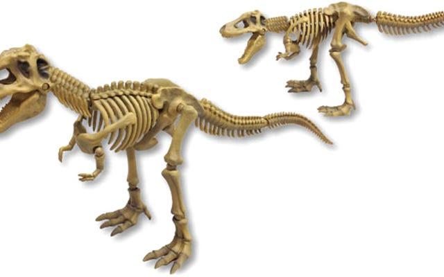 Nikmati Malam Anda Sendiri di Museum Dengan Tengkorak Dino yang Dapat Diposisikan Sepenuhnya