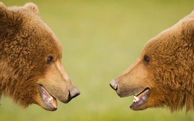 ラストコール:タホ湖セーフウェイの空腹のクマ