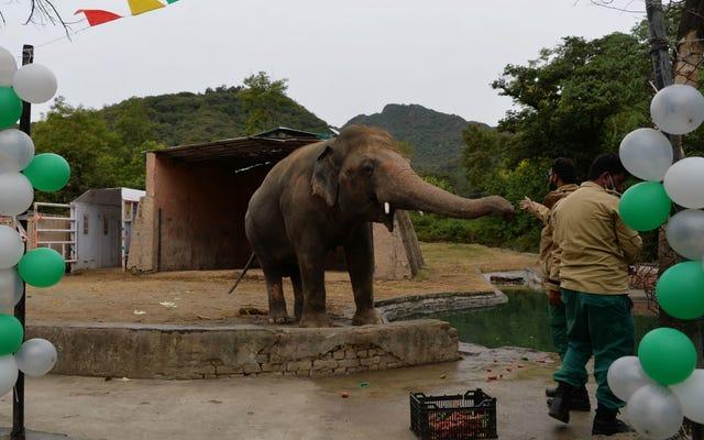 「世界で最も孤独な象」がついに友達を作る