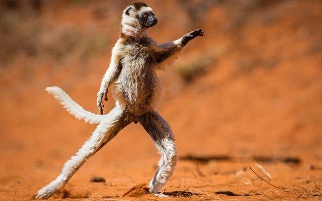 この写真コンテストは、動物界の最もばかげた楽しい画像を授与します