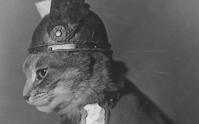 アメリカ議会図書館からのこれらのヴィンテージのパブリックドメインの猫の写真