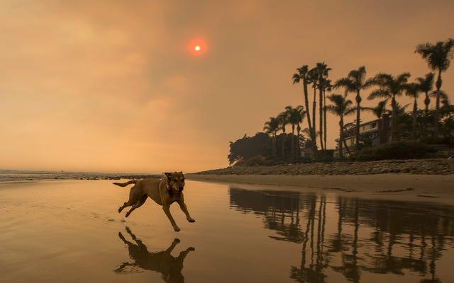 山火事の煙からペットを保護する方法