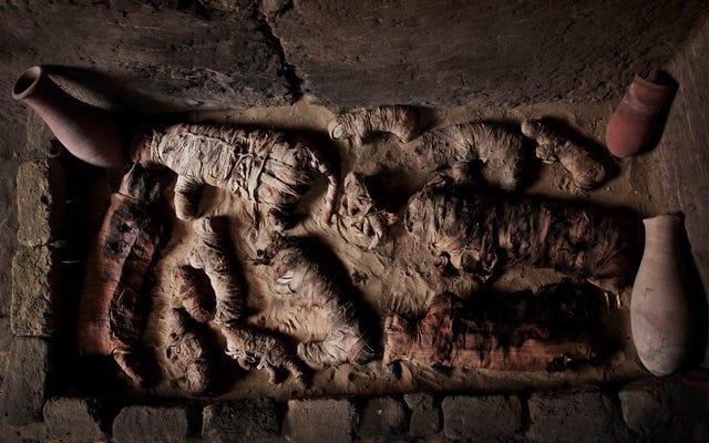 古代の猫のミイラなどがエジプトの墓で発見されました