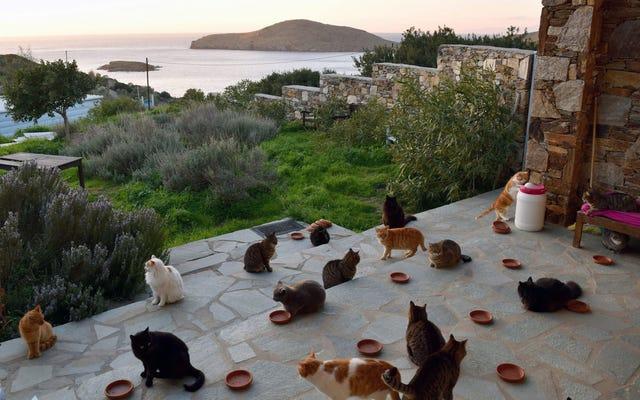 Questa paradisiaca isola greca offre uno stipendio e una casa con vista sul mare in cambio della cura di 55 gatti