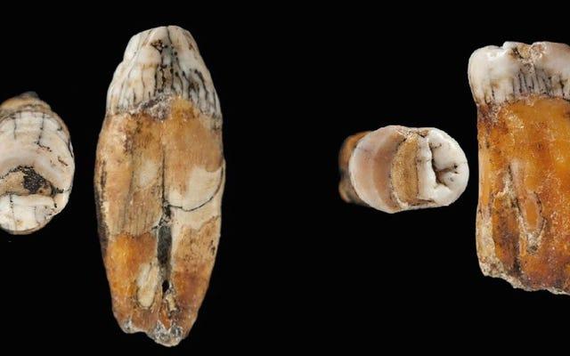 ネアンデルタール人が人間に「吸収」され、一掃されなかったというより多くの証拠