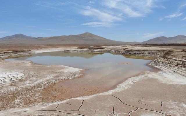 地球上で最も乾燥した場所は非常に乾燥しているため、最近の雨が大量の絶滅を引き起こしました