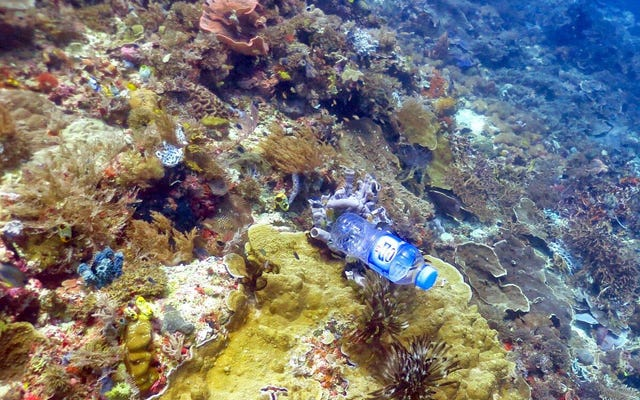 私たちはプラスチックでサンゴ礁を毒殺しています