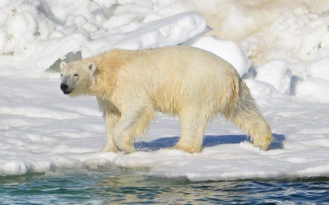 孤独な北極圏の前哨基地に駐留しているロシアの科学者たちも現在クマに囲まれている