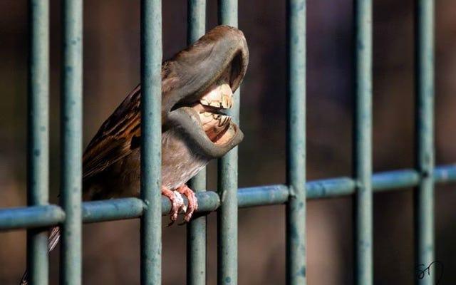 Полноценное топливо кошмара: птицы с гигантскими ртами вместо клювов