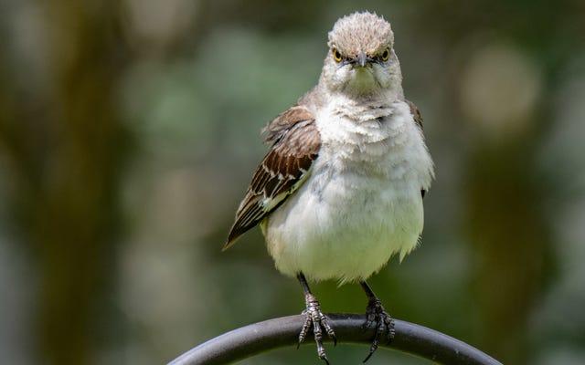 디지털 아티스트가 우리주의 새들이 왜 짜증나는지 열심히 분석합니다.