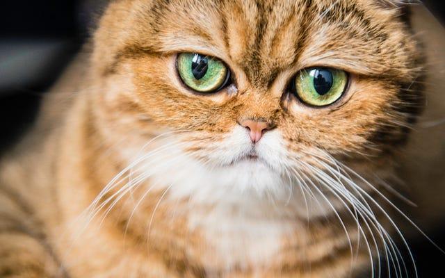 Des poils de chat aident les autorités à retrouver une femme accusée d'avoir envoyé des bombes à Barack Obama par courrier