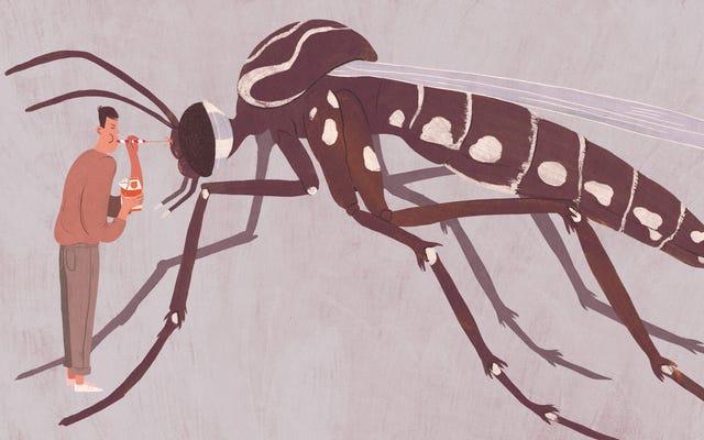 インターネット上でウイルスに感染した7つの完全に偽のZikaレメディ