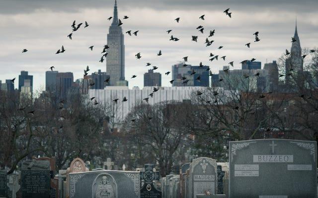 Согласно отчету, продолжительность жизни американцев к 2040 году не увеличится