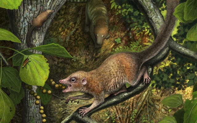 恐竜が絶滅した直後に霊長類が出現した、新しい研究が示唆している