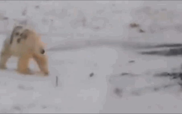 Seseorang dengan cahaya redup membuat coretan pada tubuh beruang kutub, dan bisa saja menghukumnya