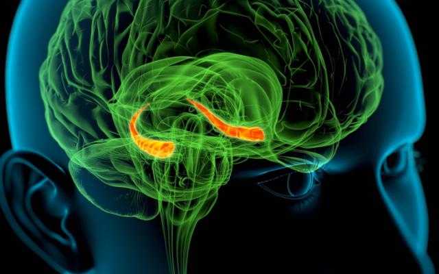 वे मस्तिष्क संकेत का पता लगाते हैं जो सटीकता के साथ जानने की अनुमति देता है कि क्या किसी व्यक्ति ने एक वाक्यांश समझा है या नहीं